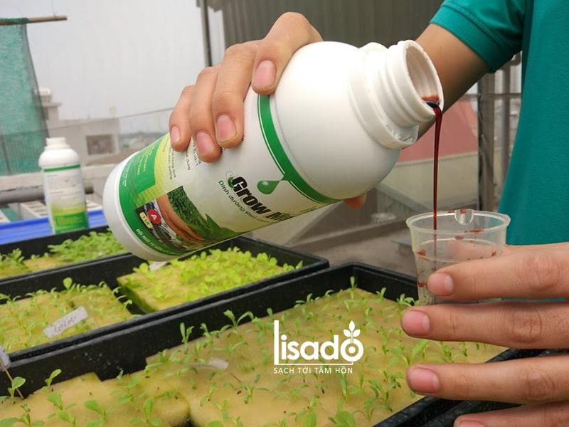 Cách chăm sóc rau trồng bằng phương pháp thủy canh