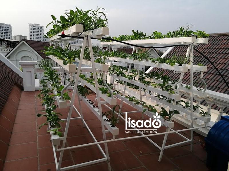 Diện tích trồng rau thủy canh nhiều hơn trồng rau thổ canh