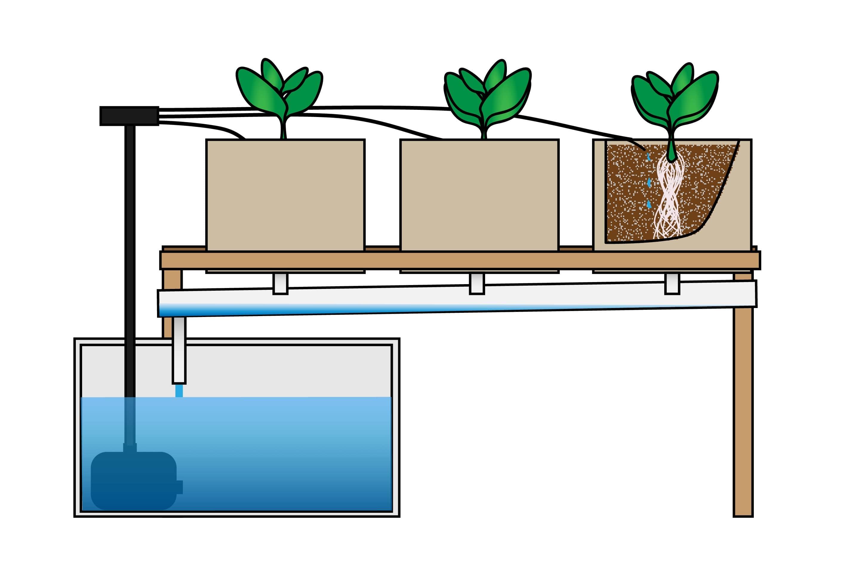 Hệ thống thủy canh nhỏ giọt (Drip hydroponic system)