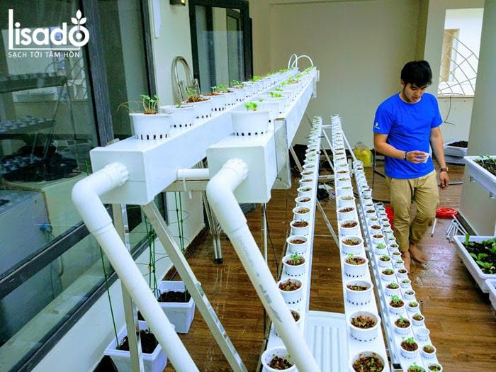 Hướng dẫn cách làm giàn trồng rau thủy canh tại nhà đơn giản