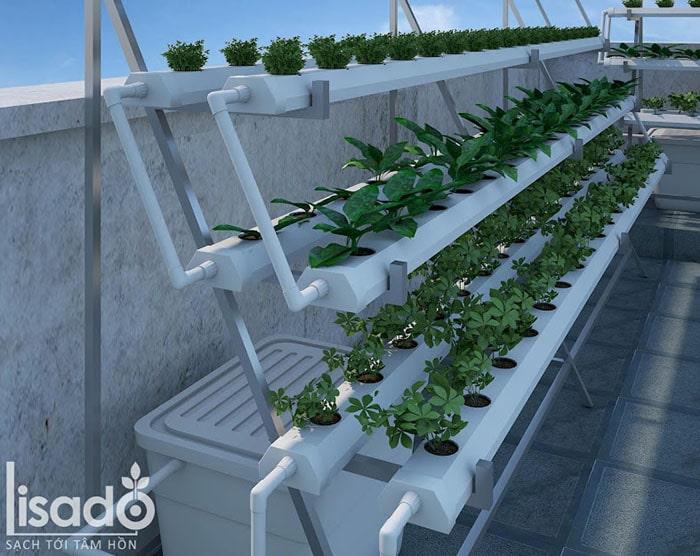 Mô hình trồng rau thủy canh tại nhà bán chữ A