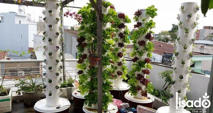 Mô hình trồng rau thủy canh tại nhà hình cột trụ đứng