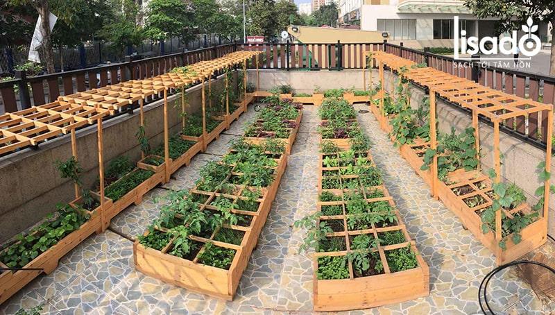 Rau trồng bằng phương pháp thổ canh