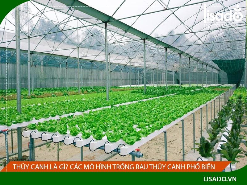 Thủy canh là gì? Các mô hình trồng rau thủy canh phổ biến