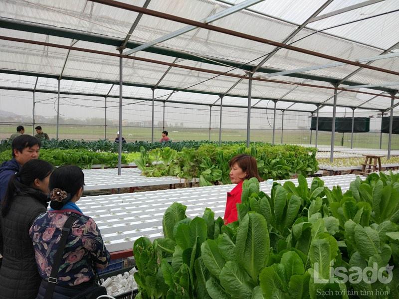 Khởi nghiệp bằng trồng rau thủy canh khó hay dễ?