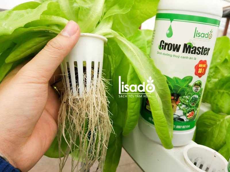 Rọ nhựa thủy canh là vật dụng dùng để đựng giá thể hoặc ươm cây con cho rau trồng thủy canh