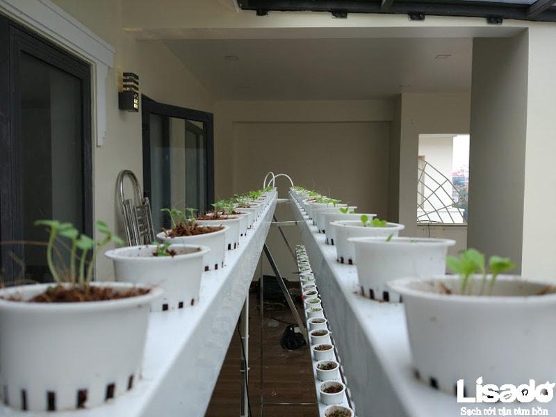 Tổng quan về công trình trồng rau thủy canh nhà anh Ngọc - TP Hà Tĩnh