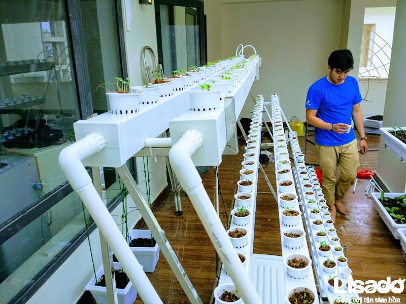 Lisado chuẩn bị mọi vật dụng thủy canh tốt nhất cho công trình trồng rau sạch tại nhà anh Ngọc - TP Hà Tĩnh