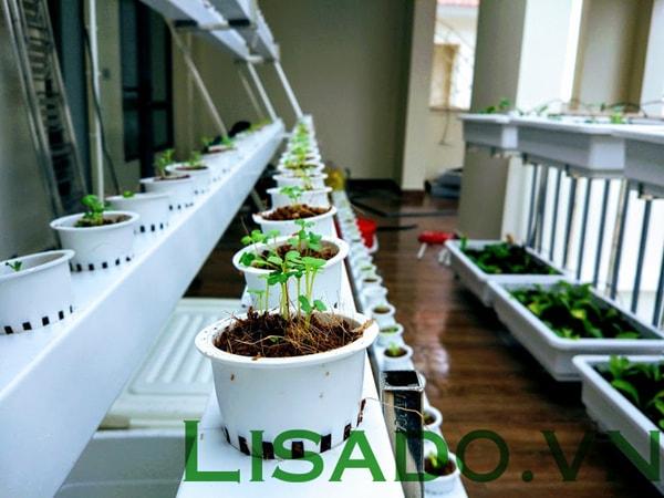 Ưu điểm khi trồng rau thủy canh bằng ống nhựa pvc