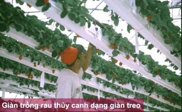 Giàn trồng rau thủy canh dạng giàn treo