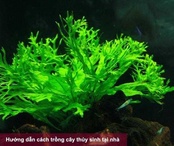 Một số lưu ý khi trồng cây thủy sinh