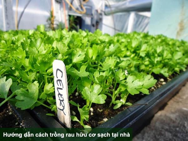 Hướng dẫn cách trồng và chăm sóc rau hữu cơ sạch tại nhà