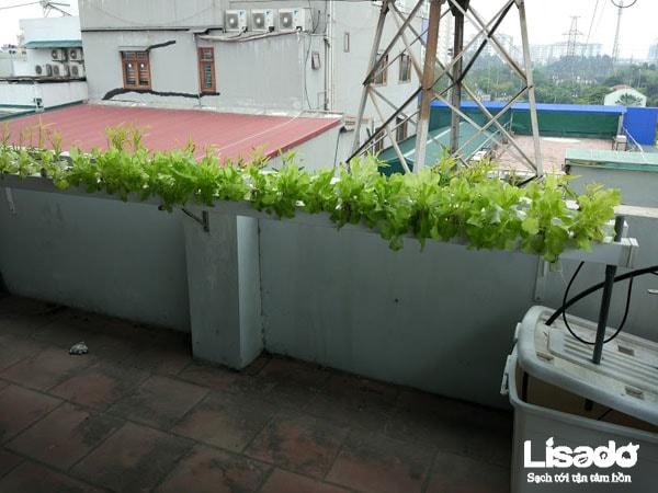 Cách trồng và chăm sóc rau sạch trên sân thượng hiệu quả cao