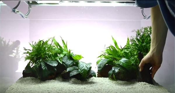 Trồng cây thủy sinh nên trồng loại nào dễ chăm sóc?