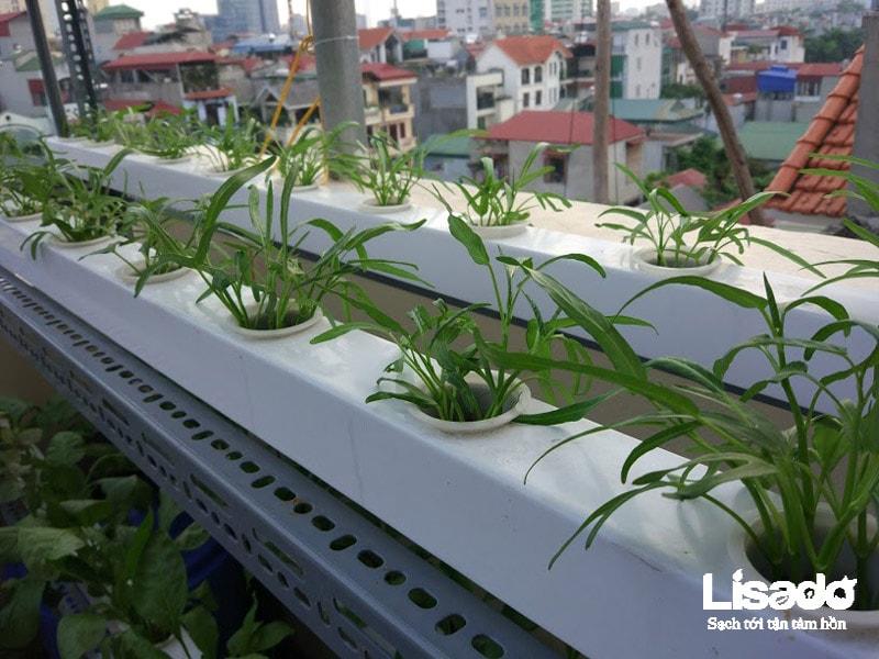 Công trình trồng rau thủy canh nhà chú Hùng tại Văn Cao- Hà Nội