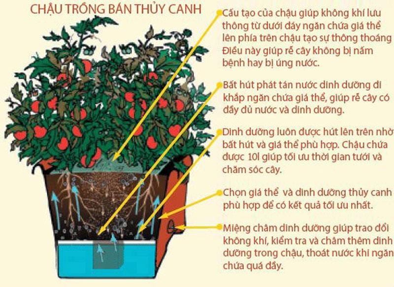 Tìm hiểu phương pháp trồng rau bán thủy canh đạt năng suất cao