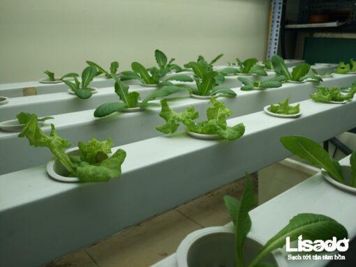 Công trình trồng rau thủy canh bằng đèn Led nhà cô Thoa - Thanh Xuân - Hà Nội