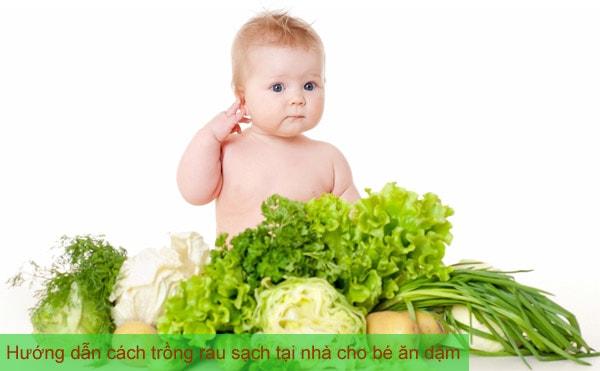 Hướng dẫn cách trồng rau sạch tại nhà cho bé ăn dặm