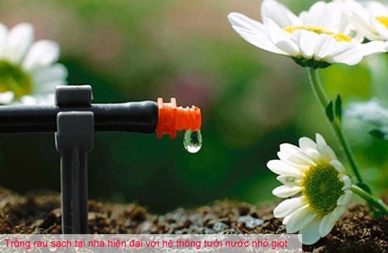 Trồng rau sạch tại nhà hiện đại với hệ thống tưới nước nhỏ giọt