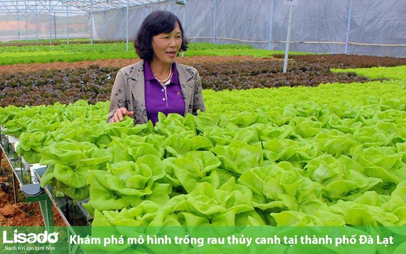 Khám phá mô hình trồng rau thủy canh tại thành phố Đà Lạt