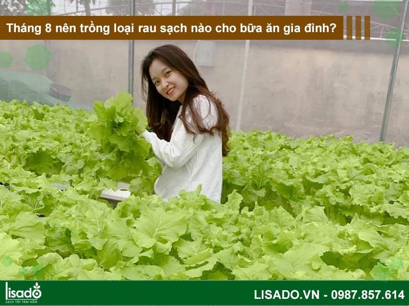 Tháng 8 nên trồng loại rau sạch nào cho bữa ăn gia đình?