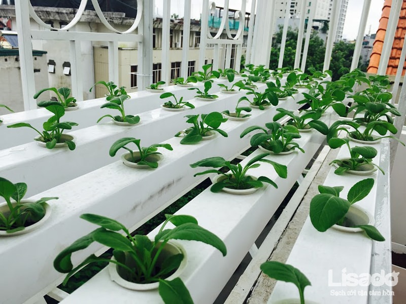 Công trình trồng rau thủy canh bán chữ A tại 390 Đội Cấn - Hà Nội