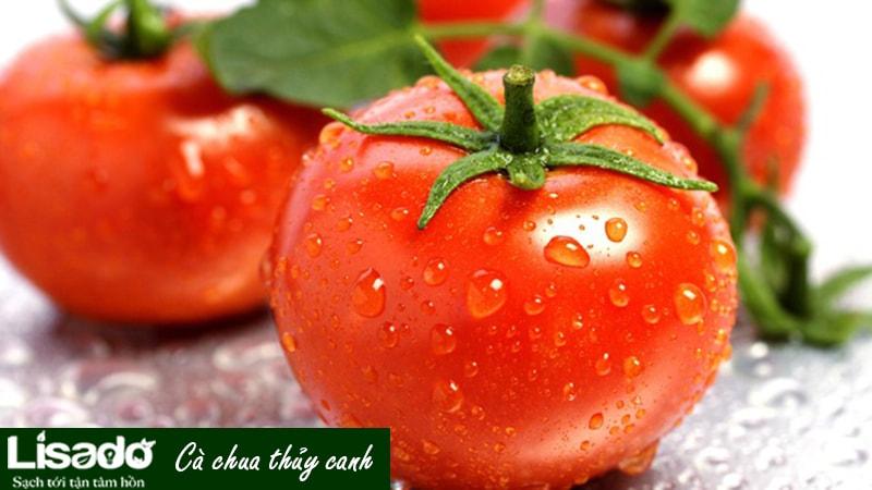 Cà chua thủy canh