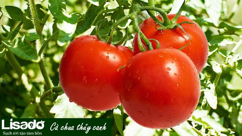 Tại sao rau quả thủy canh rất tốt cho quá trình giảm cân?