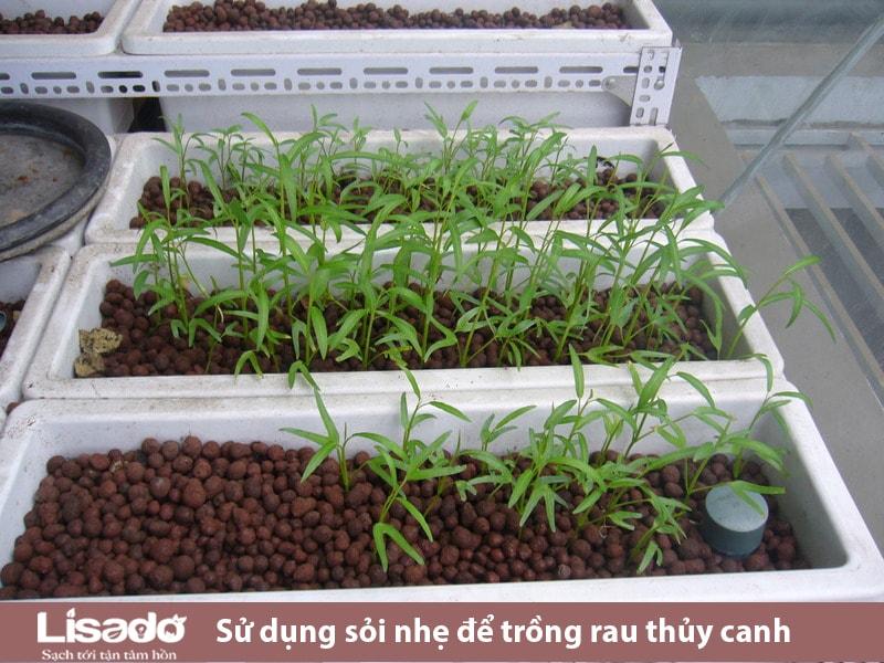 Tại sao dùng sỏi nhẹ để trồng rau thủy canh?
