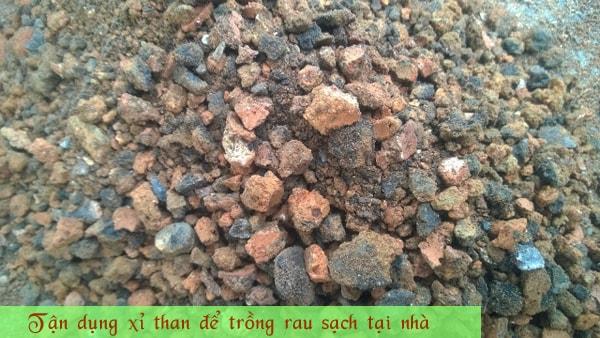 Tận dụng xỉ than để trồng rau sạch tại nhà