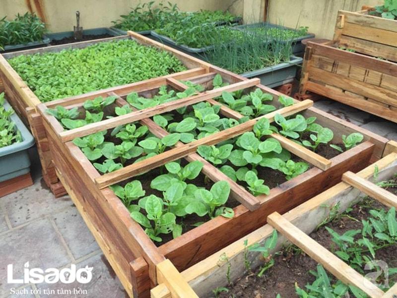 Tận dụng dung dịch thủy canh để trồng rau thổ canh sạch