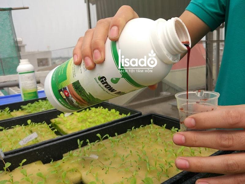 Cách pha chế dung dịch thủy canh ảnh hưởng tới chất lượng dung dịch