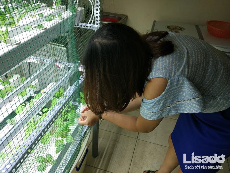 Công trình rau sạch thủy canh trong nhà tại Viện Đại Học Mở Hà Nội