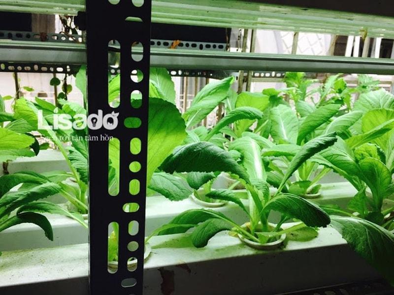 Công trình trồng rau bằng đèn led nhà cô Diệp - Hà Nội