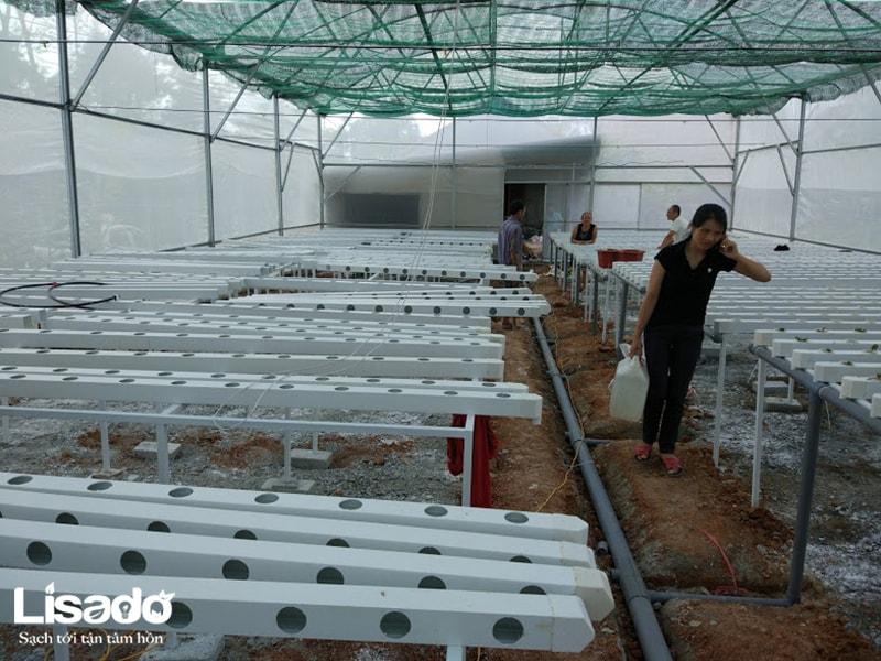 Công trình trồng rau thủy canh sạch tại Ngọc Sơn - Hà Tĩnh