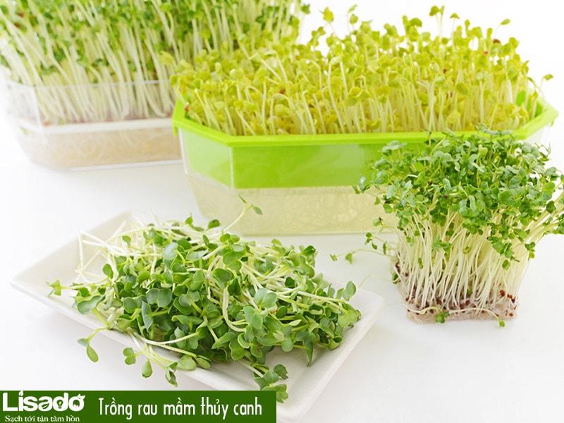 13 loại rau dễ trồng bằng phương pháp thủy canh?