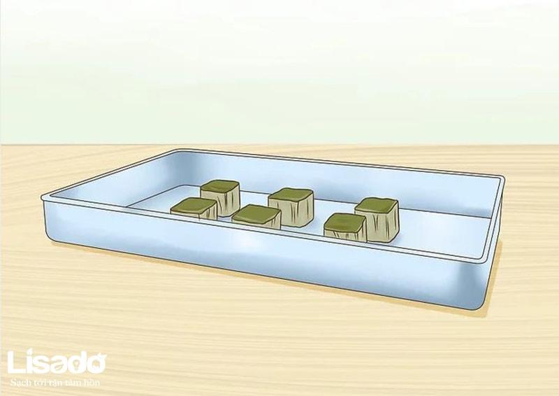 4 bước đơn giản khi ươm hạt giống gieo trồng thủy canh