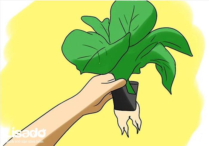Đánh giá lợi ích của trồng cây thủy canh mang lại cho bạn