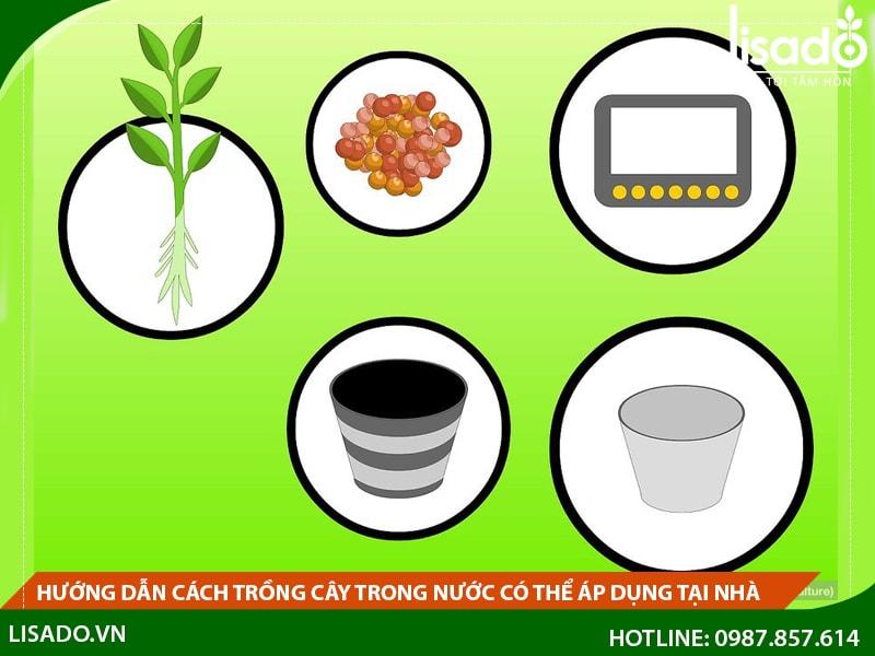 Hướng dẫn cách trồng cây trong nước có thể áp dụng tại nhà