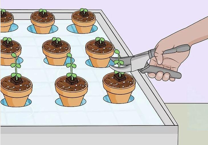 Làm thế nào để xây dựng một vườn thủy canh năng suất cao?