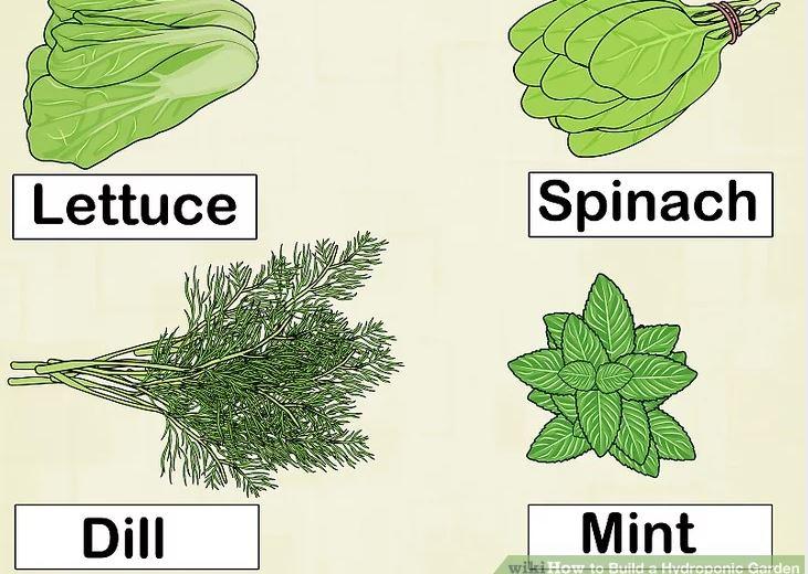 Hãy chọn rau xanh ăn lá và các loại thảo mộc