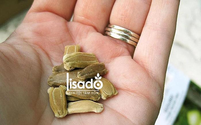 Bảo quản hạt giống rau cẩn thận, tránh hỏng