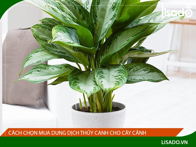 dung-dich-thuy-canh-cho-cay-canh-1-min
