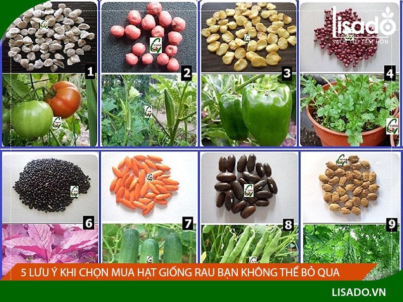 5 lưu ý khi chọn mua hạt giống rau bạn không thể bỏ qua
