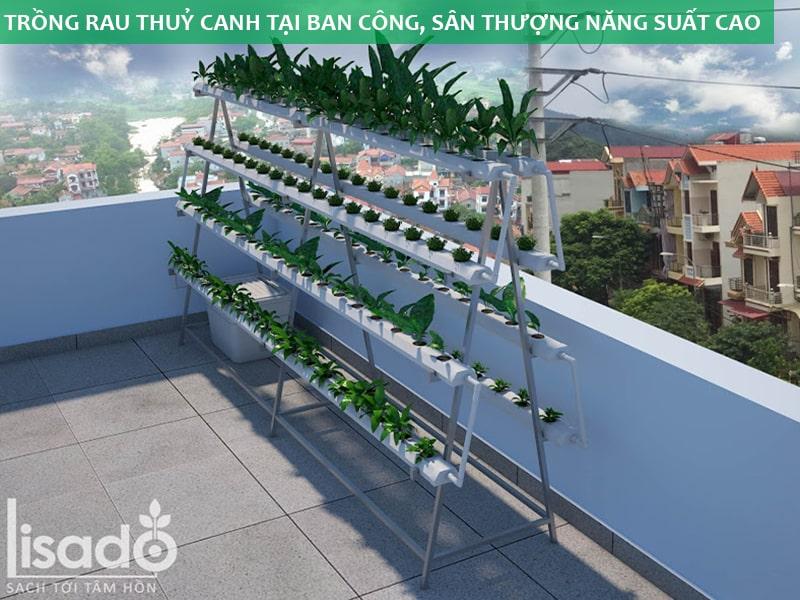 Mô hình trồng rau thuỷ canh tại ban công, sân thượng năng suất cao