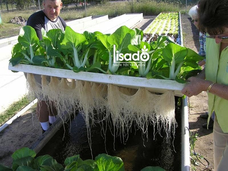 Phương pháp trồng rau thuỷ canh tĩnh