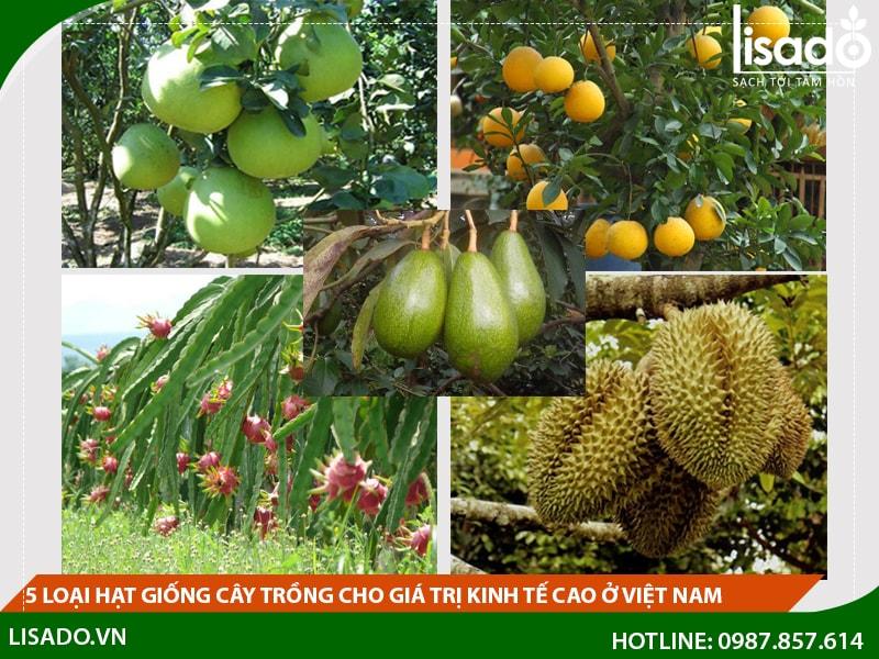 5 loại hạt giống cây trồng cho giá trị kinh tế cao ở Việt Nam