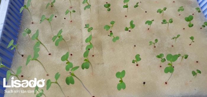 5 yếu tố cơ bản ảnh hưởng đến sự phát triển của hạt giống