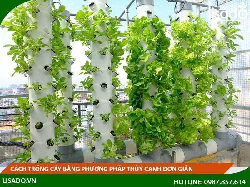 Cách trồng cây bằng phương pháp thủy canh