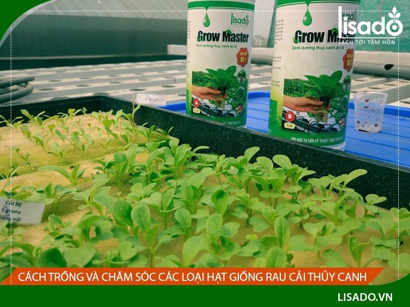 Cách trồng và chăm sóc các loại hạt giống rau cải thủy canh